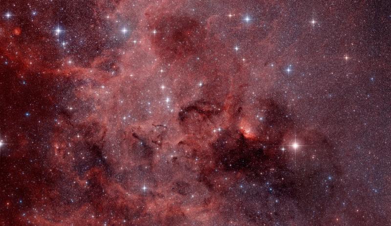 Tulip nebula region in Cygnus