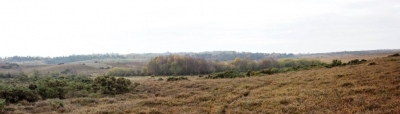 New Forest Panorama Mosaic