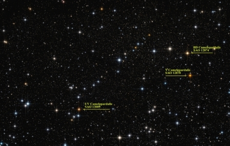 The Carbon stars of Kemble's Cascade